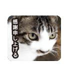 悪気のない野良猫たち(個別スタンプ:4)