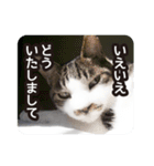 悪気のない野良猫たち(個別スタンプ:05)