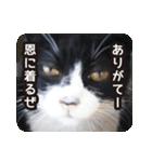 悪気のない野良猫たち(個別スタンプ:6)