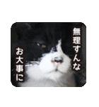 悪気のない野良猫たち(個別スタンプ:07)