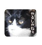 悪気のない野良猫たち(個別スタンプ:08)