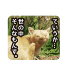 悪気のない野良猫たち(個別スタンプ:09)