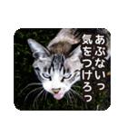 悪気のない野良猫たち(個別スタンプ:10)