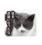 悪気のない野良猫たち(個別スタンプ:11)
