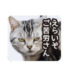 悪気のない野良猫たち(個別スタンプ:12)