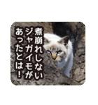 悪気のない野良猫たち(個別スタンプ:15)