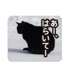 悪気のない野良猫たち(個別スタンプ:16)