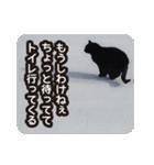悪気のない野良猫たち(個別スタンプ:17)