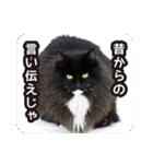 悪気のない野良猫たち(個別スタンプ:18)