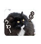 悪気のない野良猫たち(個別スタンプ:19)