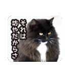 悪気のない野良猫たち(個別スタンプ:20)