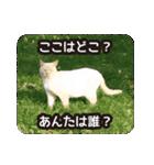 悪気のない野良猫たち(個別スタンプ:21)