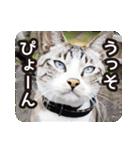 悪気のない野良猫たち(個別スタンプ:22)