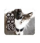 悪気のない野良猫たち(個別スタンプ:23)
