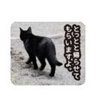 悪気のない野良猫たち(個別スタンプ:24)