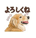 優しい犬!2毎日使える基本セット(個別スタンプ:2)