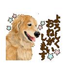 優しい犬!2毎日使える基本セット(個別スタンプ:3)