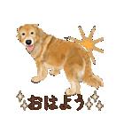 優しい犬!2毎日使える基本セット(個別スタンプ:5)