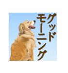 優しい犬!2毎日使える基本セット(個別スタンプ:6)