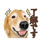 優しい犬!2毎日使える基本セット(個別スタンプ:9)