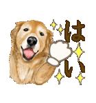 優しい犬!2毎日使える基本セット(個別スタンプ:10)