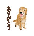 優しい犬!2毎日使える基本セット(個別スタンプ:13)