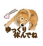 優しい犬!2毎日使える基本セット(個別スタンプ:19)