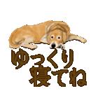 優しい犬!2毎日使える基本セット(個別スタンプ:20)
