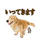 優しい犬!2毎日使える基本セット(個別スタンプ:22)