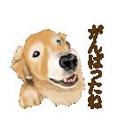 優しい犬!2毎日使える基本セット(個別スタンプ:24)
