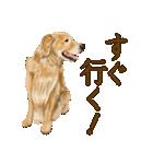 優しい犬!2毎日使える基本セット(個別スタンプ:30)