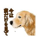 優しい犬!2毎日使える基本セット(個別スタンプ:31)