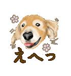 優しい犬!2毎日使える基本セット(個別スタンプ:33)