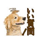 優しい犬!2毎日使える基本セット(個別スタンプ:38)