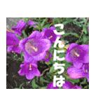 花のスタンプ3(個別スタンプ:1)