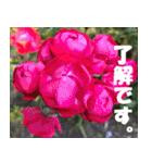 花のスタンプ3(個別スタンプ:2)