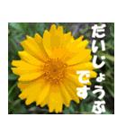 花のスタンプ3(個別スタンプ:3)