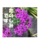 花のスタンプ3(個別スタンプ:4)