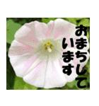 花のスタンプ3(個別スタンプ:6)