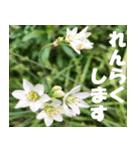 花のスタンプ3(個別スタンプ:7)