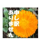 花のスタンプ3(個別スタンプ:8)