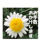 花のスタンプ3(個別スタンプ:9)