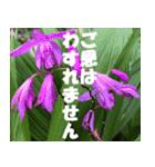 花のスタンプ3(個別スタンプ:10)