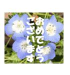 花のスタンプ3(個別スタンプ:11)