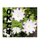 花のスタンプ3(個別スタンプ:12)