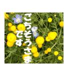 花のスタンプ3(個別スタンプ:13)