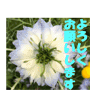 花のスタンプ3(個別スタンプ:14)