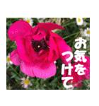 花のスタンプ3(個別スタンプ:15)