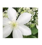 花のスタンプ3(個別スタンプ:16)