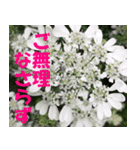 花のスタンプ3(個別スタンプ:17)